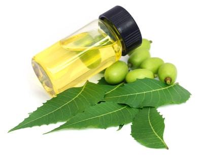 Neemöl Anwendung Wirkung Nebenwirkung Dosierung