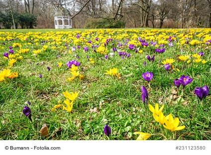 Anbau Und Pflege Fur Fruhjahrsbluher